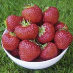 Growing Stawberries - A Bowl of nice Ripe Strawberries