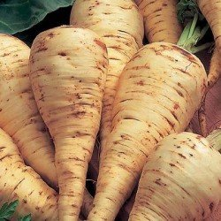 A group of parsnips